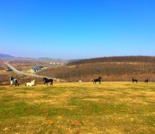 Echitatie Sibiu Ecvideea