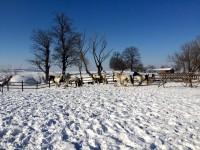 Cazare cai Sibiu Ecvideea