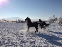 Achizitii si transport cai Ecvideea Sibiu
