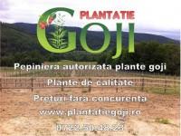 Plante goji de calitate livrate cu certificat de calitate